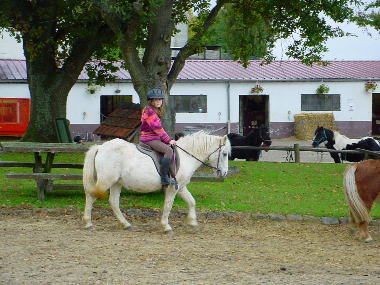 Quintia poney