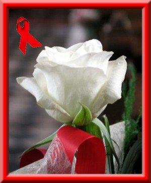 Rose et ruban rouge