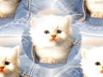 motif pour fond chat