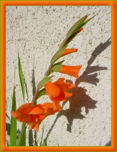 fleursdujardin1.jpg