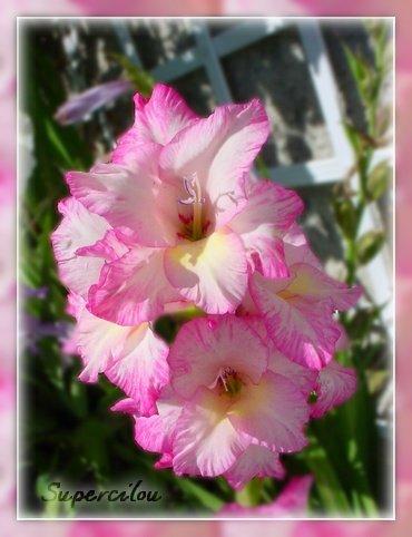 fleursdujardin2.jpg