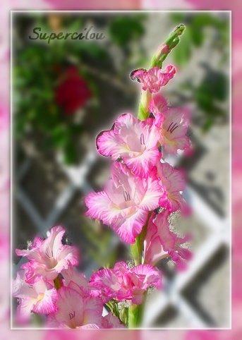 fleursdujardin3.jpg