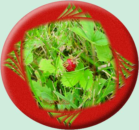 fraisedesbois.png