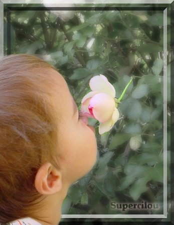 Renzo et la rose