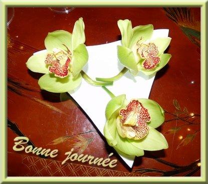 bonnejourneorchides.jpg