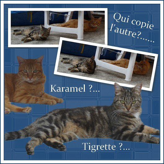 Scrap Karamel et tigrette